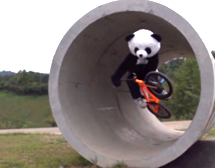 Trick shots are Dude Perfect's specialty. And Pandas.